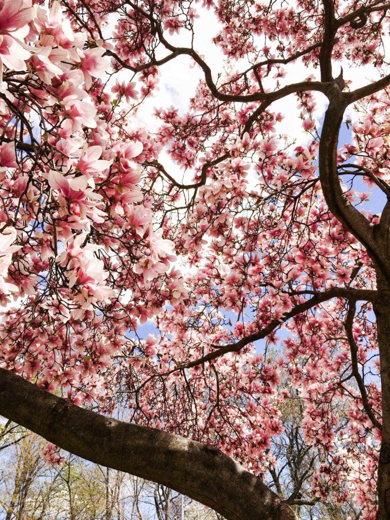 Photo 27-04-14 13.48.03
